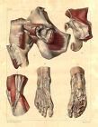 Medical Anatomy Antique Print-SYNOVIAL BURSA-ABDOMEN-BOURGERY-Jacob-Benard-1831
