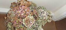 Natural Bunch Dried Hydrangea Flowers/Blooms/Heads Floral/Florist Arrangement