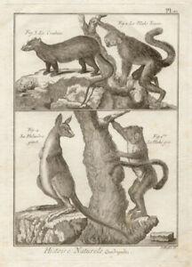 Histoire Naturelle Quadrupeds 1