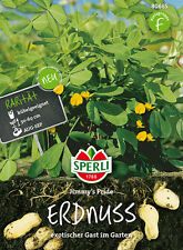 "Sperli - Peanut "" Jimmy's Pride "" for Pot cultivation Peanut seeds 80685"