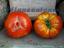 Tomate Buffalo Beefsteak - 20 Samen - große Fleischtomate - Rote Ponderosa