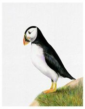 Puffin Bird Watercolour Painting A4 Signed Limited Edition Print Wildlife Gift