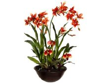 "28"" Oncidium/Lady's Slipper Orchid in Terra Cotta Bowl Rust Green Silk Flower"
