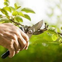 Ciseaux Cisaille jardin Razorsharp Cisailles de jardin en acier inoxydable SK-5,