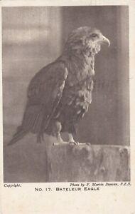 OLD POSTCARD ANIMAL BIRD BATELEUR EAGLE LONDON ZOO 1920S W15
