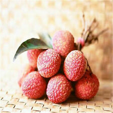 10pcs Fresh Lychee Litchi Seeds Delicious Sweet Seasonal Fruit Rare