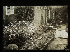 Glass Magic Lantern Slide A COTTAGE GARDEN  C1910 FLOWERS PLANTS