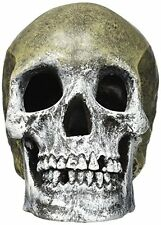 Exotic Environments Human Skull Aquarium Ornament 5Inch by 71/2Inch by 6Inch