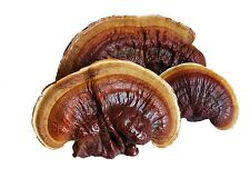 Reishi Ganoderma Mannentake Lucidum  mushroom fungus dry Seeds Mycelium