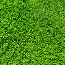 Green Grass Backdrop Photography Prop Studio Vinyl Background 3X5FT DB800