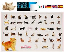 POSTER GATTI NEL MONDO-CATS-GATOS-Abissino,Certosino,Persiano,Turkish Angora