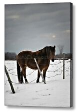 Horse in Winter ~ 12x16 Ready to Hang CANVAS WRAP PRINT ~ WALL ART