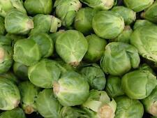 500 LONG ISLAND IMPROVED BRUSSEL SPROUTS 2017(non-gmo heirloom vegetable seeds!)