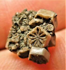 Crinoid star stone fossil UK Jurassic Pentacrinites Charmouth crystals jewellery