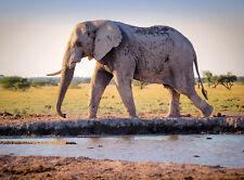 Foto di origine animale elefante africano POSTER WALL ART PRINT PICTURE LF2878