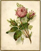 Vintage Moss Rose flower VINTAGE ENAMEL METAL TIN SIGN WALL PLAQUE
