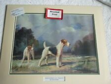 More details for wire haired fox terrier dog print mounted for framing, ward binks