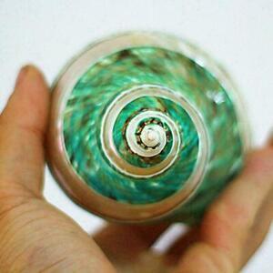 Natural Green Turban Shell Conch Coral Sea Snail Home Tank Decor Fish 11CM D4H7