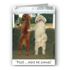 Dogs & Postman Funny Greeting Card - Bichon