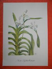Vanda Gilbert TribuIé Orchidaceae orquídea impresión en color francia 1962