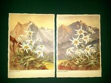 2 AK Blumen Karl Strauß Felix Korn Verlag  Künstlerkarte