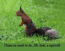 METAL REFRIGERATOR MAGNET So Much To Do Oh Look A Squirrel Friend Family Humor