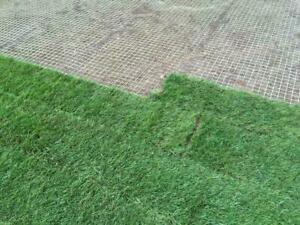 Rasenschutzgitter Ø2-3mm Rasengitter Bodengitter Rollrasen Schutzgitter
