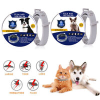For Pet Dog Cat 38/62cm Flea and Tick Collar Anti Insect 8 Month Protection NEW