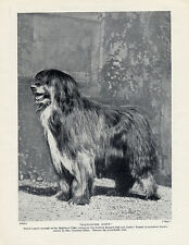 "BEARDED COLLIE ORIGINAL VINTAGE DOG PRINT PAGE 1934 ""BALMAENEIL SCOTT"""