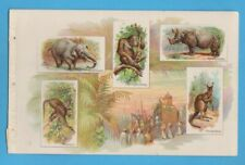 1889 A11 Allen & Ginter Quadrupeds album page #3 w/ 5 beautiful lithos Rhino