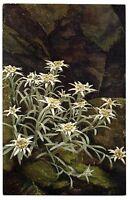CPA Fantaisie Fleurs de Montagne Bouquet d'Edelweiss