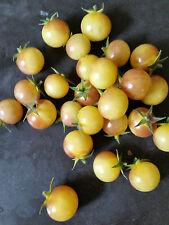 10+ ANTHO WEIß Tomatensamen Mini Tomate Saat Samen Kirschtomate selten