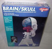 SKILCRAFT BRAIN AND SKULL MODEL KIT