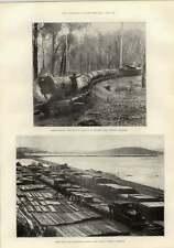 1897 Forêt de chemin de fer Danemark Hills Western Australia George Gissing WHIRLPOOL