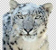 Mac OS X Snow Leopard 10.6  Bootfähige Install- / Recovery DVD