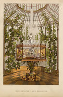 DECORATIVE Conservatory and Aquarium - Antique 1900s Print - Cassells #D628