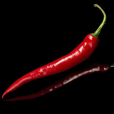 Hot Pepper-Cayena/Chile 10 semillas-liveseeds -
