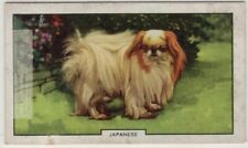 Japanese Chin Dog Canine Pet 1930s Ad Trade Card