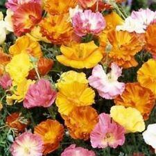Poppy- Ballerina Mix- 200 seeds- 50 % off sale