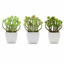 """Set of 3 7"""" tall Assorted Faux Succulent Plants with Off White Ceramic Pots"""