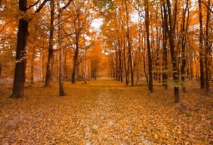 Photo Backdrops 6x4FT Vinyl Autumn Maple Forest Photo Photography Background