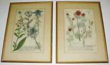 Produtos botânicos
