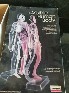 OLDER LINDBERG VISIBLE HUMAN BODY 1/6 SCALE MODEL KIT