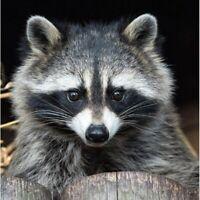 5D Round Diamond-Painting Full Drill Raccoon Cross Stitch Decor Gifts Leisure