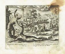 SACRIFICIO MORTE ABELE CAINO Cain Abel death  Acquaforte Originale Jollain 1680