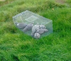 Feral Pigeon Trap, Catch - Alive, free p&p. Made in UK