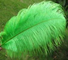 A Dozen 22-24 inches 12 Pieces Lime Green Ostrich Feathers (Ga, Usa)