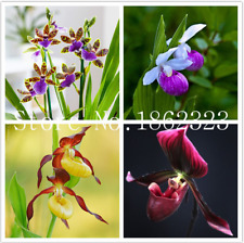 100 Pcs Seeds Orchid Flowers Monkey Bonsai Perennial Garden Pot Plants New X V B