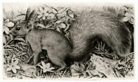 TIMOTHY J GREENWOOD Signed Etching SQUIRREL - 20TH CENTURY - 29/100