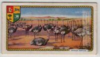 Ostrich Farming In South Africa c90 Y/O Ad Trade Card